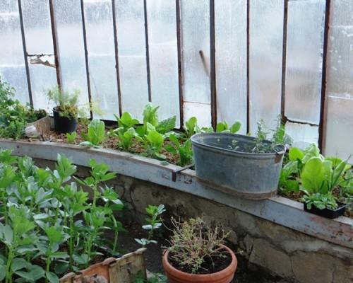 Serre Villa Gaia à Digne les Bains cuisine bio
